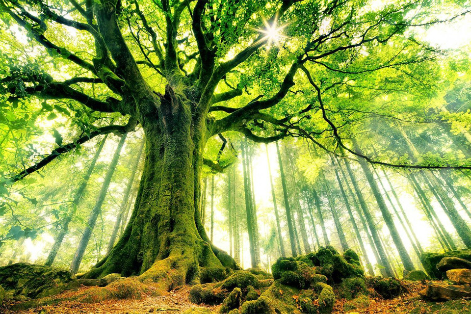15 Most Beautiful Trees in the World