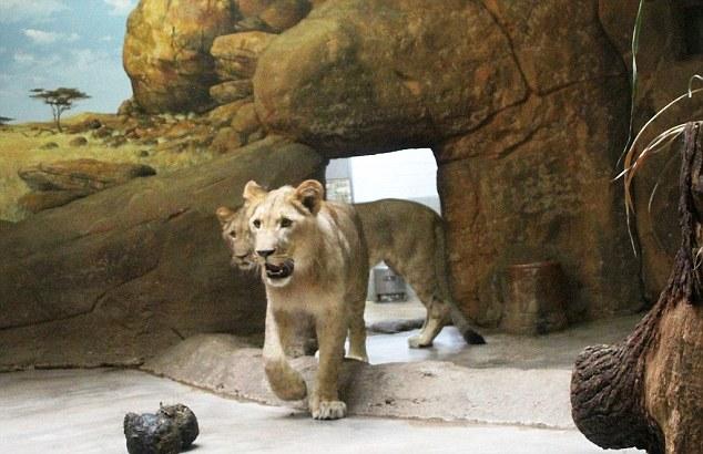 Almost 500 Animals Dead in British Zoo