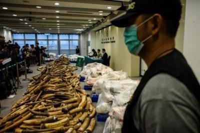 Customs Hong Kong finds 7200 Kilos of Elephant Tusks