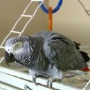 Woman Guilty of Husband Murder where A Parrot Witnessed
