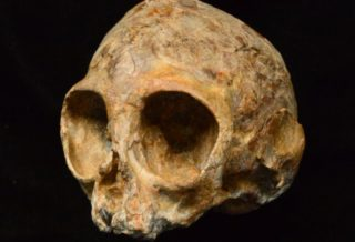 Scientists Found 13 Million Years Old Rare Skull