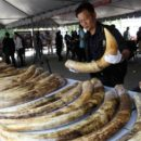 China Stops Its Legal Trade of Ivory