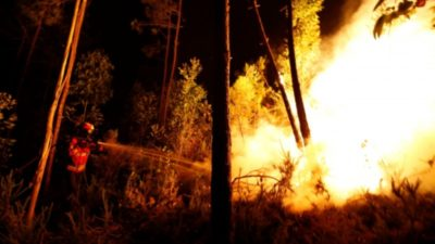 Forest Fires in Algarve Continue to Rage: 16,500 Hectares Destroyed