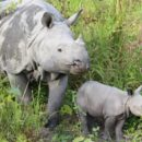 Chinese Government Postpones Lifting Trade Ban on Rhino and Tiger Products